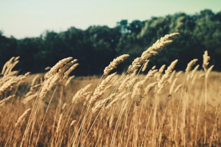 summerfield-336687_1280
